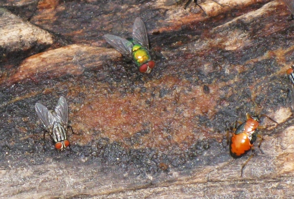Insects on Rotting Wood 2
