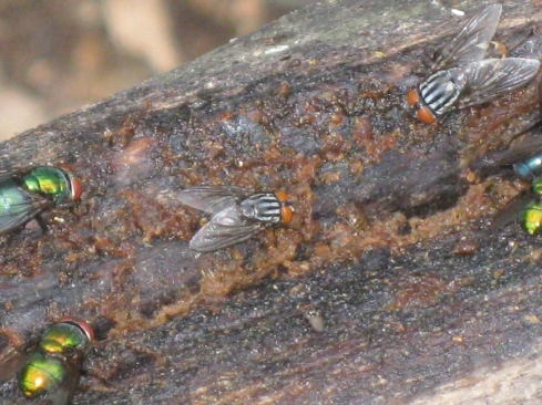 Insects on Rotting Wood