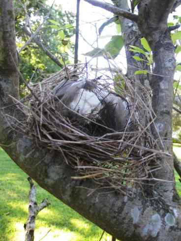 Bird's Nest in Tree