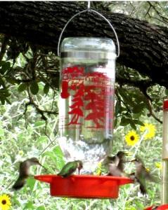 crop hummers